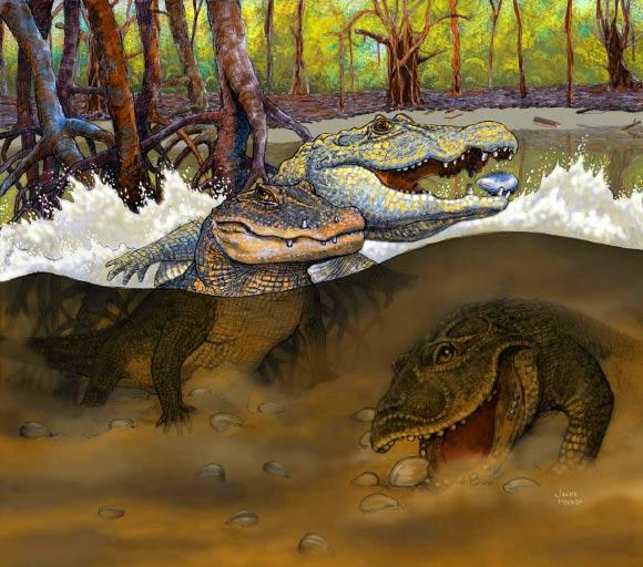 image_2536_1-Miocene-Crocodiles