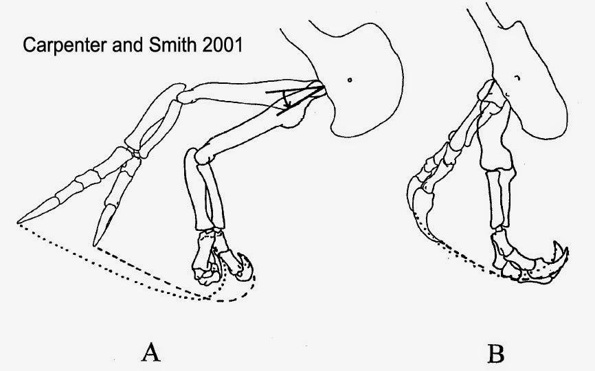 tyrannosaurus arm