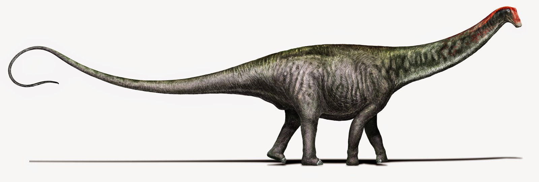 Brontosaurus_Copyright_DavideBonadonna (1)