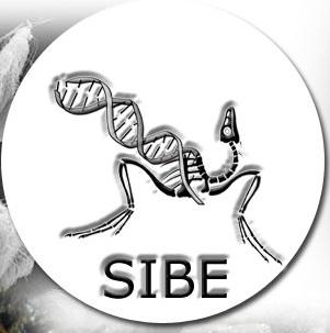Sibe1