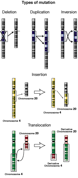 Types-of-mutation