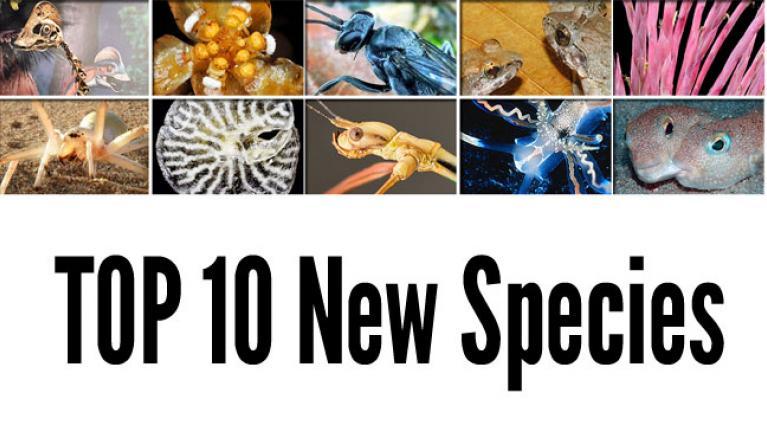 top-10-new-species-2015