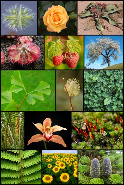 403px-Diversity_of_plants_image_version_5