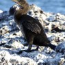 L'evoluzione prevedibile degli uccelli insulari
