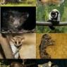 Strade differenti per gli antichi primati