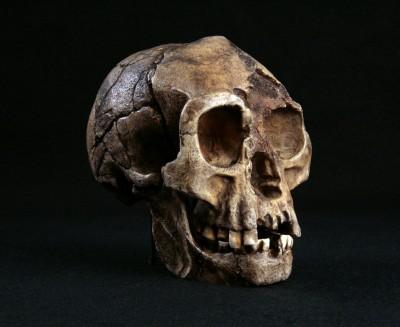 Homo floresiensis: ritrovati resti di un probabile antenato datati 700.000 anni fa