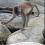 Archeologia dei primati: uso di strumenti in pietra da parte dei macachi in Tailandia