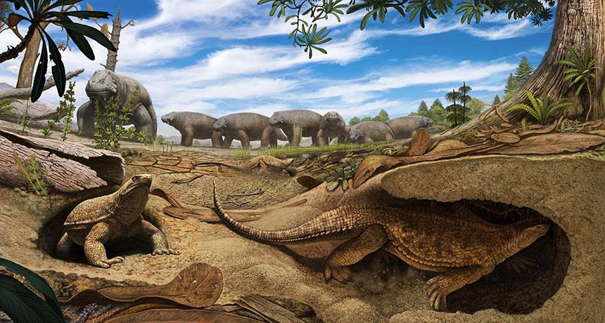 eunotosaurus-africanus