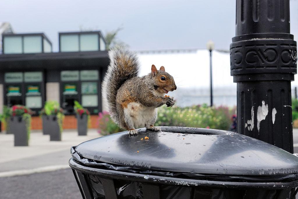 1024px-urban_wildlife_-_squirrel