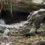 Il tuatara è un fossile vivente?