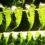 Quali fattori guidano l'origine e l'estinzione delle specie? Dai fossili di felce nuove risposte a vecchi interrogativi