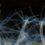 Anemoni e meduse riscrivono l'evoluzione dello sviluppo embrionale