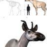 Alla base dell'albero delle giraffe