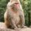 Uno sguardo sull'isolamento sociale nei primati