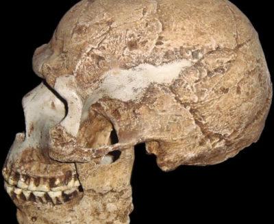 I più antichi resti umani fuori dall'Africa