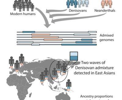Aggiornamenti sulle ibridazioni tra la nostra specie con i Neanderthal e i Denisovani