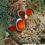 La funzione e l'evoluzione dei colori dei pesci pagliaccio