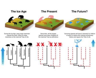 La sesta estinzione di massa è in atto, e i mammiferi sono le prime vittime