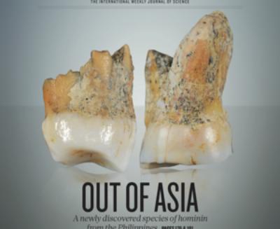 Una nuova specie di Homo dal Sud-est asiatico