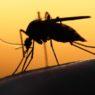 Gene drive: una biotecnologia per estinguere la malaria