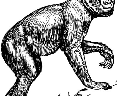 Prima del bipedismo c'era Danuvius guggenmosi