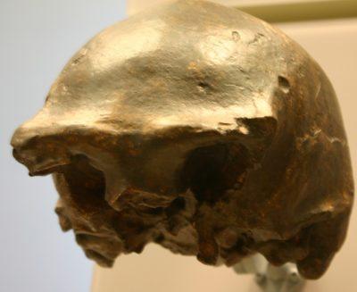 Gli ultimi Homo erectus