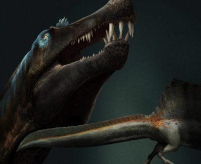 Una grande coda pinnata: lo spinosauro era davvero un dinosauro acquatico!