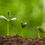 Una finestra critica sulla neurobiologia vegetale