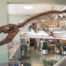 Il mosasauro mascellone
