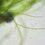 I virus che cambiarono le alghe