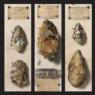 Primordi: alla riscoperta del Paleolitico francese a Modena